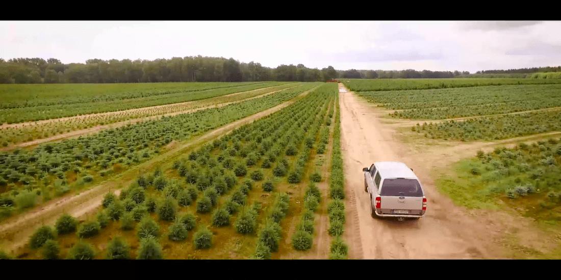 Film reklamowy polskie choinki
